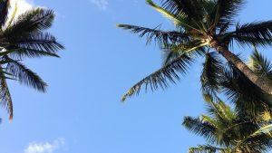 ハワイ旅行はパッケージそれとも個人旅行?徹底比較